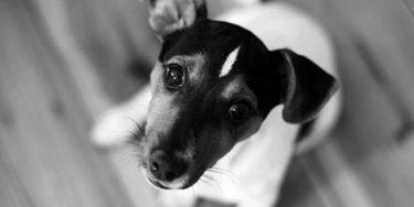 Veterinaria mascotas