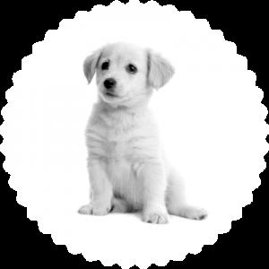seguro perros basico