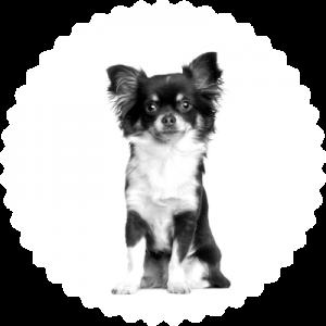 seguro perro completo