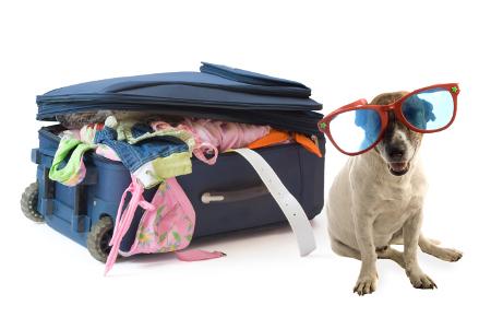 documentos para viajar con mi perro
