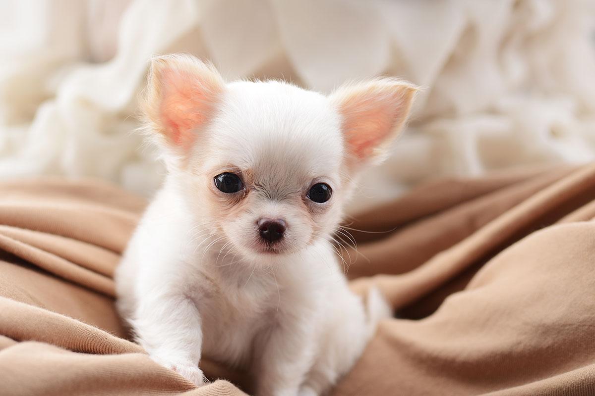 Enseñar a un cachorro nuevo en casa a ser limpio